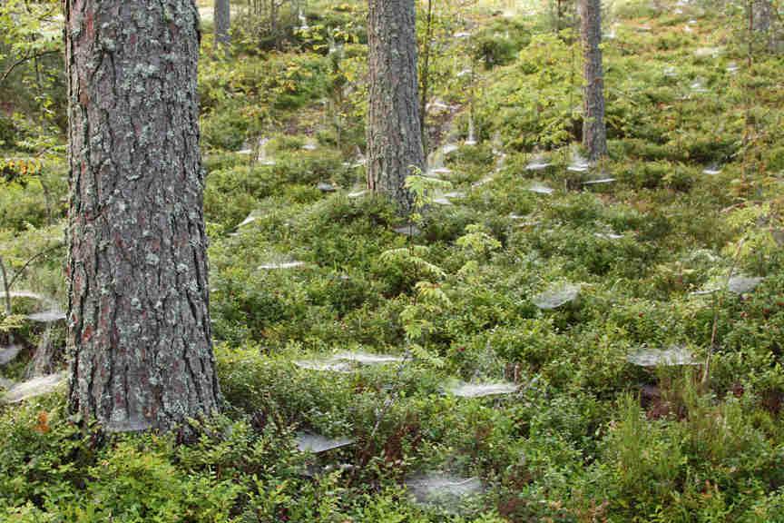 1.Moduuli_metsä
